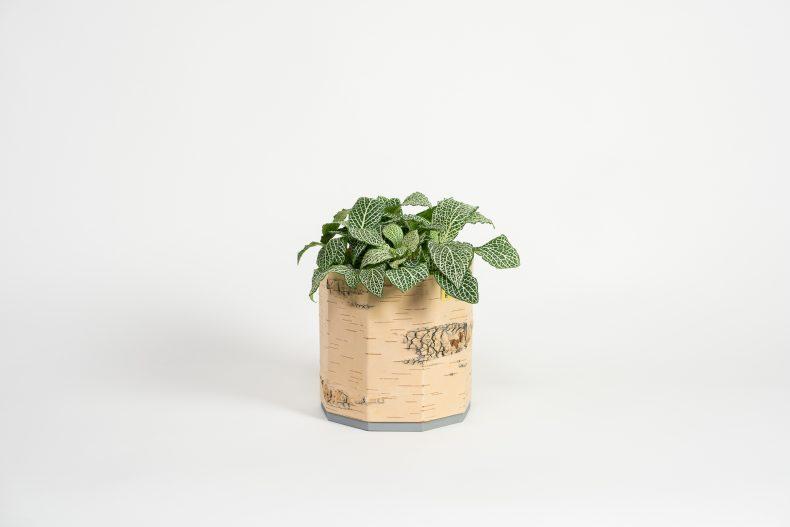 Zimmerpflanzen Übertopf aus Birkenrinde und Holz
