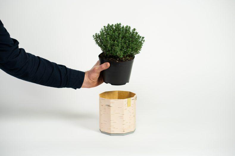 Birken Übertopf für Kräuter und Pflanzen von MOYA