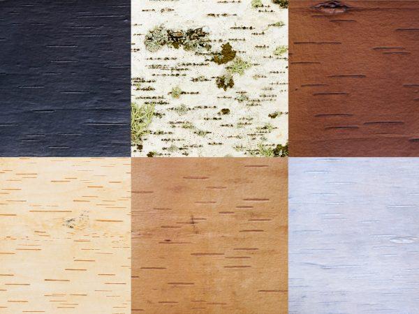Moya Surfaces - Birkenrinde Oberflächen Musterbox